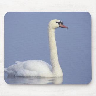 Mute Swan, Cygnus olor, adult in fog, Mouse Pad
