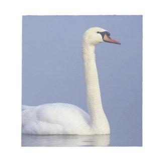 Mute Swan, Cygnus olor, adult in fog, Scratch Pads