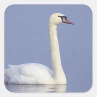Mute Swan, Cygnus olor, adult in fog, Square Sticker
