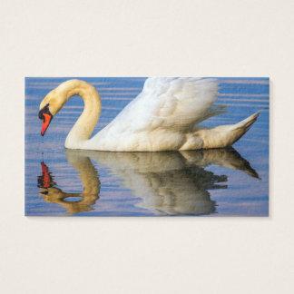 Mute swan, cygnus olor business card