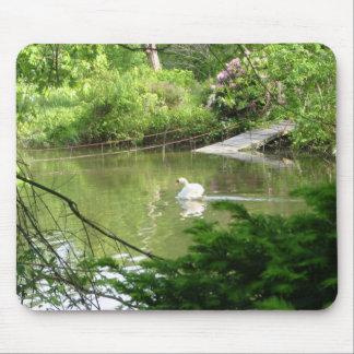 Mute Swan (Cygnus Olor) by Footbridge Mouse Pad