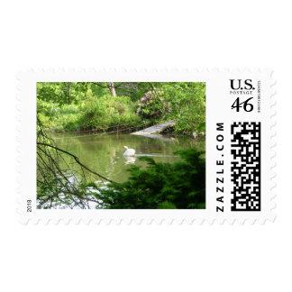 Mute Swan (Cygnus Olor) by Footbridge Stamps