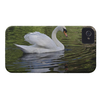 Mute Swan (Cygnus olor) Louisville, Kentucky 2 Case-Mate iPhone 4 Cases