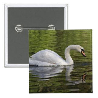 Mute Swan (Cygnus olor) Louisville, Kentucky Pin