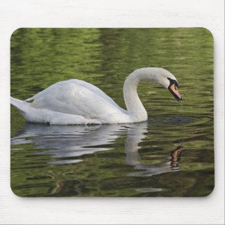 Mute Swan (Cygnus olor) Louisville, Kentucky Mouse Pad