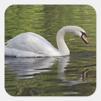 Mute Swan (Cygnus olor) Louisville, Kentucky Stickers