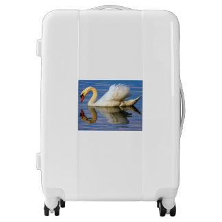 Mute swan, cygnus olor luggage