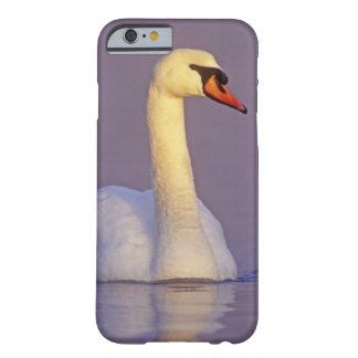 Mute Swan, Cygnus olor,male, Unterlunkhofen, Barely There iPhone 6 Case