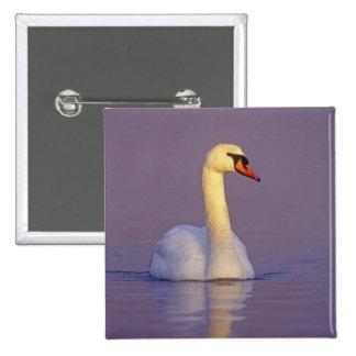 Mute Swan, Cygnus olor,male, Unterlunkhofen, Pinback Buttons