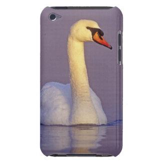Mute Swan, Cygnus olor,male, Unterlunkhofen, Barely There iPod Case