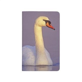 Mute Swan, Cygnus olor,male, Unterlunkhofen, Journal