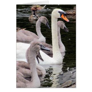Mute Swan Family Card