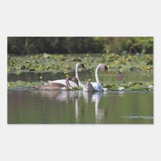 Mute swan family swimming rectangular sticker