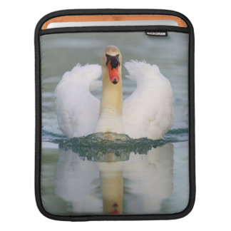 Mute swan in the pond sleeve for iPads