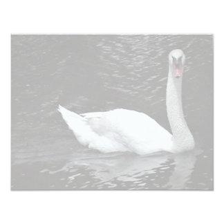 Mute Swan Announcements