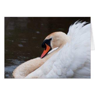 Mute Swan Notecard