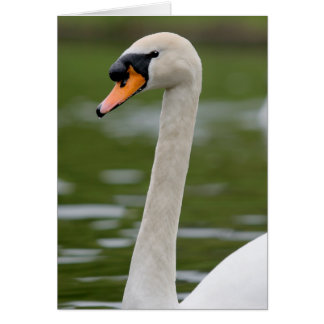 Mute Swan on Cam River Greeting Card