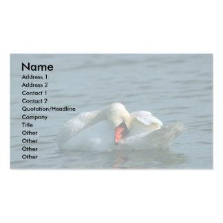 Mute Swan, preening Business Cards