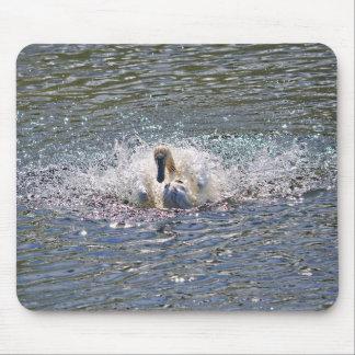 Mute Swan Preening in Sunlit Lake Waters Mouse Pad