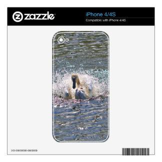 Mute Swan Preening in Sunlit Lake Waters Skins For The iPhone 4