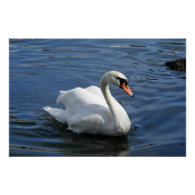 Mute Swan Premium Canvas Print