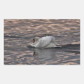 Mute swan swimming at sunset rectangular sticker