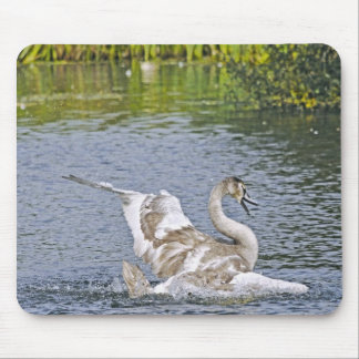 Mute Swan Wildlife Waterfowl Photo Mouse Pad