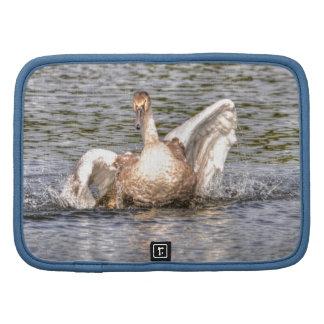 Mute Swan Wildlife Waterfowl Photo Folio Planners