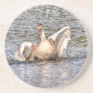 Mute Swan Wildlife Waterfowl Photo Sandstone Coaster