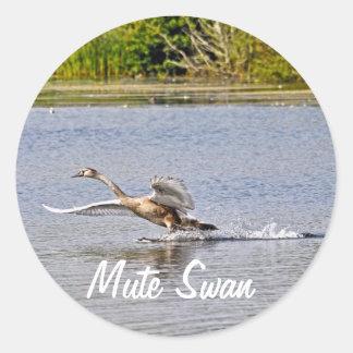 Mute Swan Wildlife Waterfowl Photo Stickers