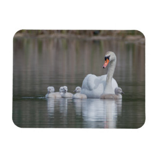 Mute Swan with Babies Small Magnet