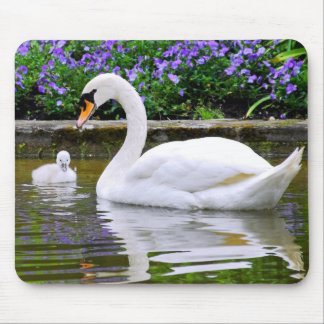 Mute swan with nestlings on water mouse pad