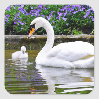 Mute swan with nestlings on water sticker