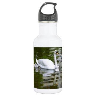 Mute swan with nestlings on water water bottle