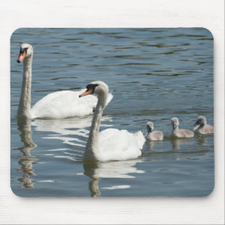 Mute Swans And Ducklings Mouse Pad