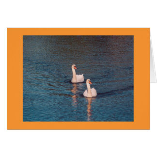 Mute Swans on the Rideau Card