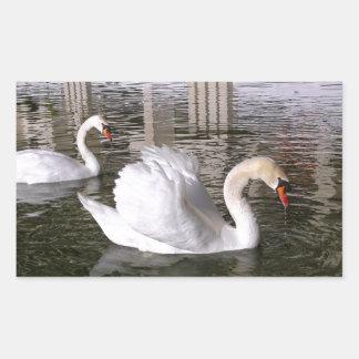 Mute swans on water rectangular stickers