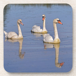 Mute swans swimming drink coaster