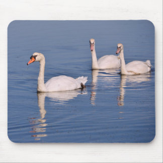 Mute swans swimming mouse pad