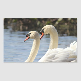 Mute swans swimming rectangular sticker