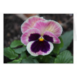 Muted Purple Pansy, Blank Floral Notes Greeting Card