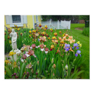Mutil Colored Iris Flower Poster