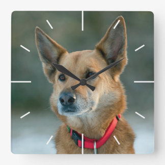 mutt dog with red collar square wallclock