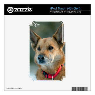 mutt dog with red collar decal for iPod touch 4G