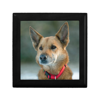 mutt dog with red collar gift box