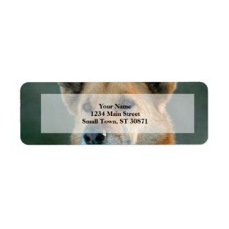 mutt dog with red collar return address label