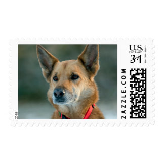 mutt dog with red collar postage stamp