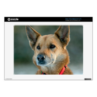 mutt dog with red collar acer chromebook skin
