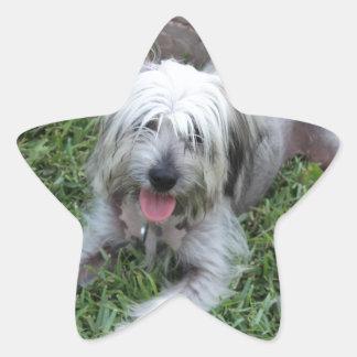 Mutt perezoso pegatina en forma de estrella