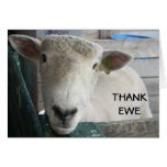 MUTTON MORE TO SAY - THANK EWE CARD